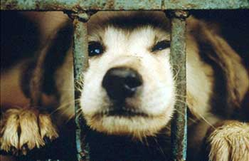 Animal cruelty in Asia